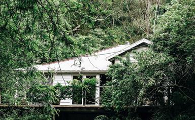 Luxury farmhouse home to Australia's largest magnolia tree