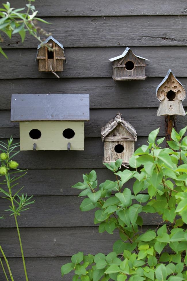 Bird houses on the garden shed.   Photo: Simon Griffiths