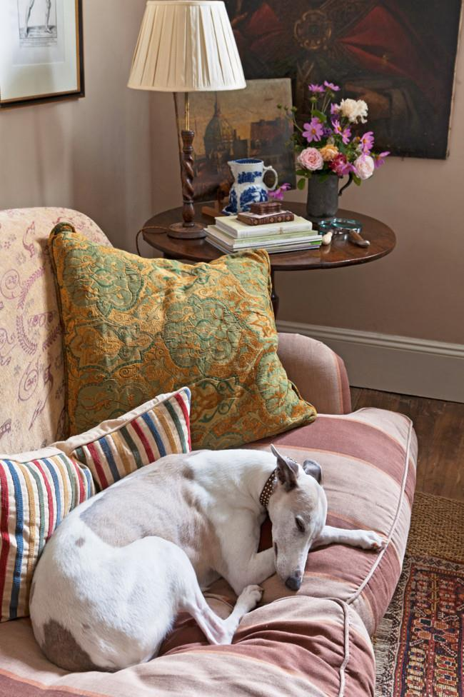 """""""It's impossible to keep whippets off the furniture.""""   Photo: Simon Griffiths"""