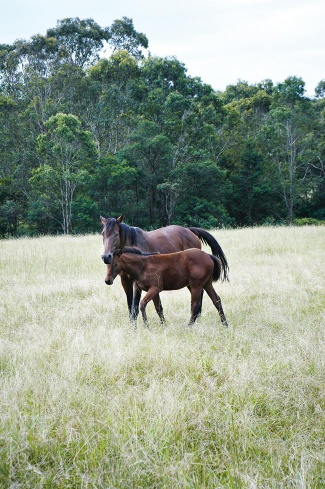 Prize-winning mare Lucia, with her four-month-old foal, Banjo.  **For more home inspiration, take a look at this [Bellingen Family Home](http://www.homelife.com.au/homes/galleries/bellingen+family+home,17275) gallery.** | Photo: Michael Wee