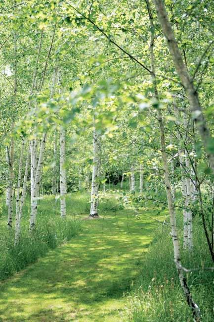 The mood is unashamedly romantic as you tread softly along grassy paths through the silver birches. In spring, it is even more so, with pretty freesias, bluebells and hoop-petticoat daffodils scattered below.