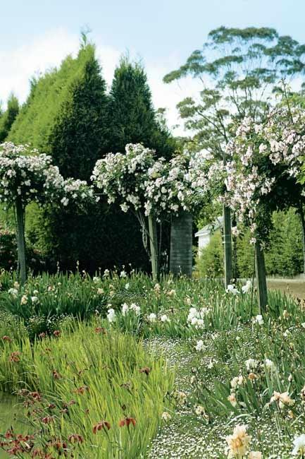 """Floral standards and [climbing roses](https://www.homestolove.com.au/rose-varieties-australia-3218