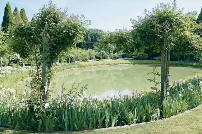 A lake rimmed by iris flowers. Spring flowers have always been a particular highlight of visits to Kennerton Green. The magnificent tulip display comes first, followed closely by the irises which are at their peak around mid-October.