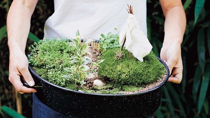 YOU WILL NEED:  • Pencil and paper  • A large vessel (I used a large enamel baking dish that I bought from an op shop and drilled holes in the bottom for drainage)  • A variety of small plants with varying heights, colours and widths (work out if your garden will be inside/outside/in the shade/full sun, and buy plants accordingly – bonsai plants can work well)  • Potting mix  • Small trowel  • A variety of mosses (I gathered moss from the alleyways behind my house and kept it very moist and in a dark spot until I needed it)  • Rocks for stepping-stone path  • Pebbles (I used 2 different sizes: very small and tiny)  • 12–15 toothpicks for fence • Scraps of fabric and small twigs for tepee | Photo: Chris Middleton