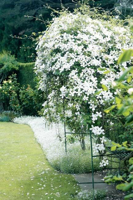 A clematis-covered archway.[](http://www.homehints.com.au/for+the+garden/838/reading/feature+garden:+kennerton+green) | Photo: Sam McAdam-Cooper