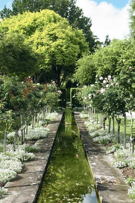 Standard hybrid tea roses, under-planted with mounds of alyssum, frame the long canal in the old rose garden.