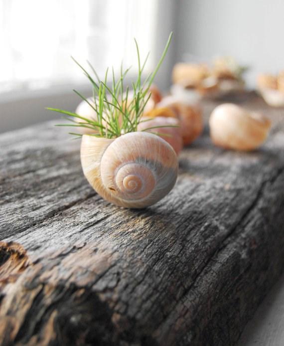 Imitation snail shells are an intimate space to nurture your miniature plants. Image via [Viral Creek Garden](http://garden.viralcreek.com/plastic-snail-shell-planter-mini-plants/).