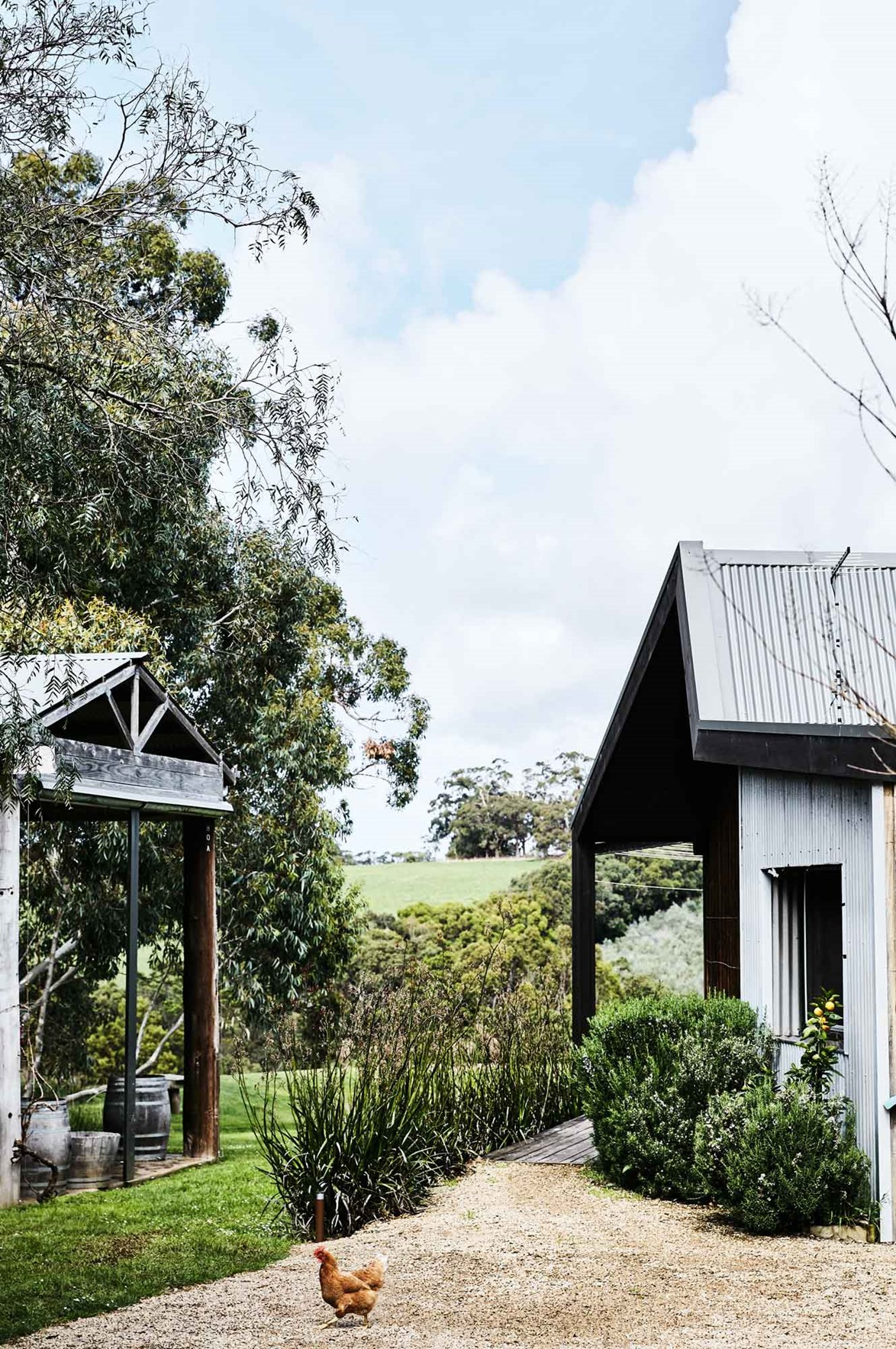 """A lone chook explores the grounds of [Hart's Farm](https://www.homestolove.com.au/a-mornington-peninsula-cottage-and-olive-grove-13815