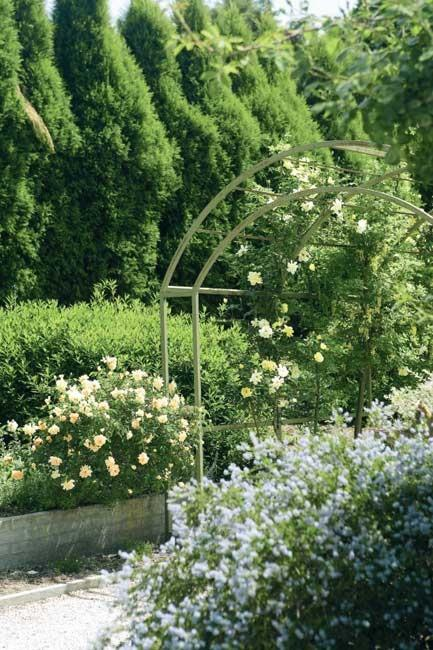 'Golden Showers' roses over the archway, companion planted with laburnum. | Photo: Sam McAdam-Cooper