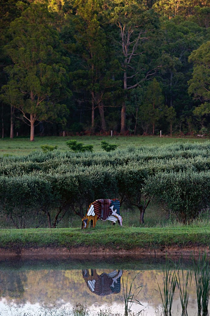 Jeff Thomson's corrugated iron cow sculpture stands by the pond.