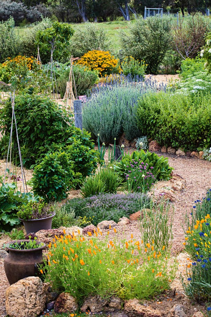 "A primary feature of the garden is its ""affinity beds"", comprised of herbs and hues to complement different wines. The riesling affinity bed is home to rhubarb, Thai mint, radicchio and a spicy oregano ground cover.  