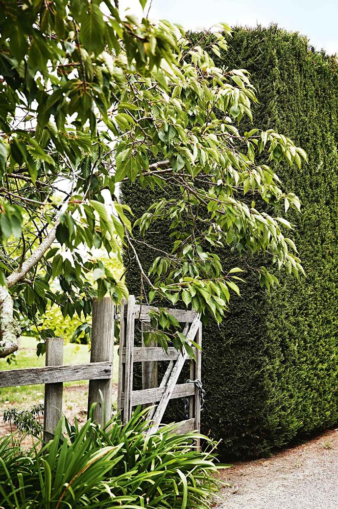 "A [cherry tree](https://www.homestolove.com.au/how-to-plant-a-fruit-tree-1902|target=""_blank"") hangs over a gate that leads towards the ponds."