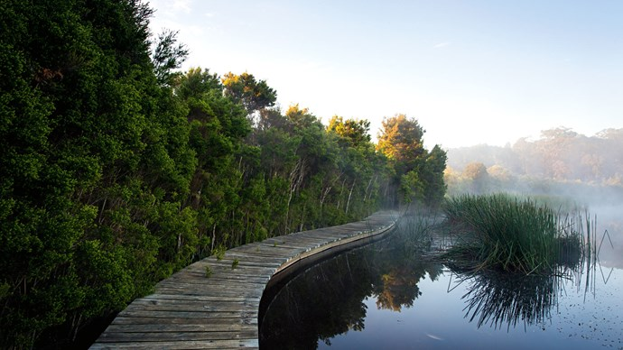The hidden lake sits behind the house and a little hill. Early morning mist clears at the start of the eastern boardwalk, which snakes past the reeds into the tea-trees.