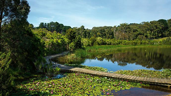 "The couple can wonder over the lake - past clusters of floating [water lilies](https://www.homestolove.com.au/how-to-grow-water-lilies-9991|target=""_blank"") - by way of a timber boardwalk."
