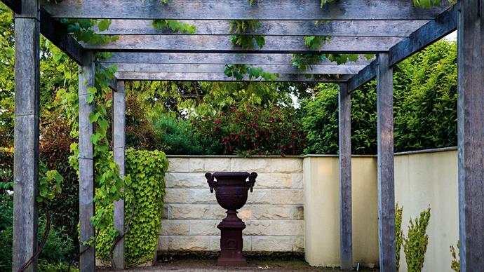 The pergola bears ornamental grapevines, with Virginia ivy on the walls and Portuguese laurels in the background. During summer, the pergola erupts into a mass of green.