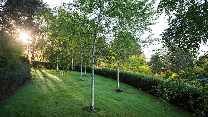 Birch Lawn is ringed by a Westringia fruticosa hedge. The Lawn is one of the property's vantage points, offering a different perspective over the landscape.