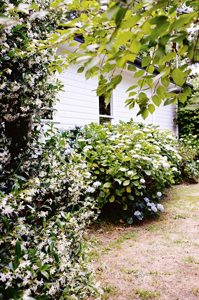 """""""It's a beautiful old red building [covered in Boston ivy](https://www.homestolove.com.au/fast-growing-climbing-plants-1584