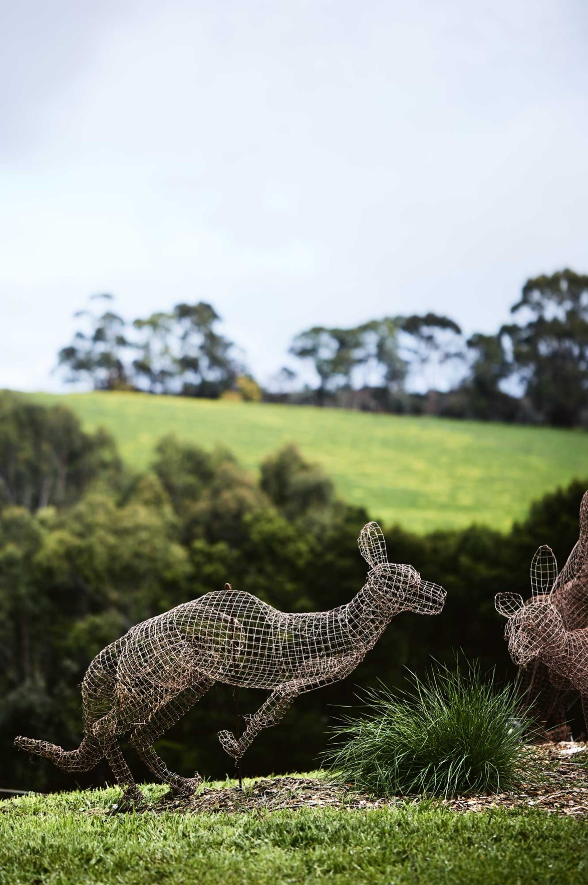 "Kangaroo sculptures made from chicken wire by artist Tom Ripon are in motion in the garden of a [renovated farmhouse](https://www.homestolove.com.au/farmhouse-extension-australia-13815|target=""_blank""