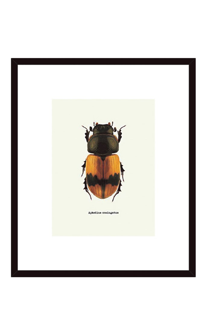 'Beetle Orange' framed print, $139, [Temple & Webster](https://www.templeandwebster.com.au/)