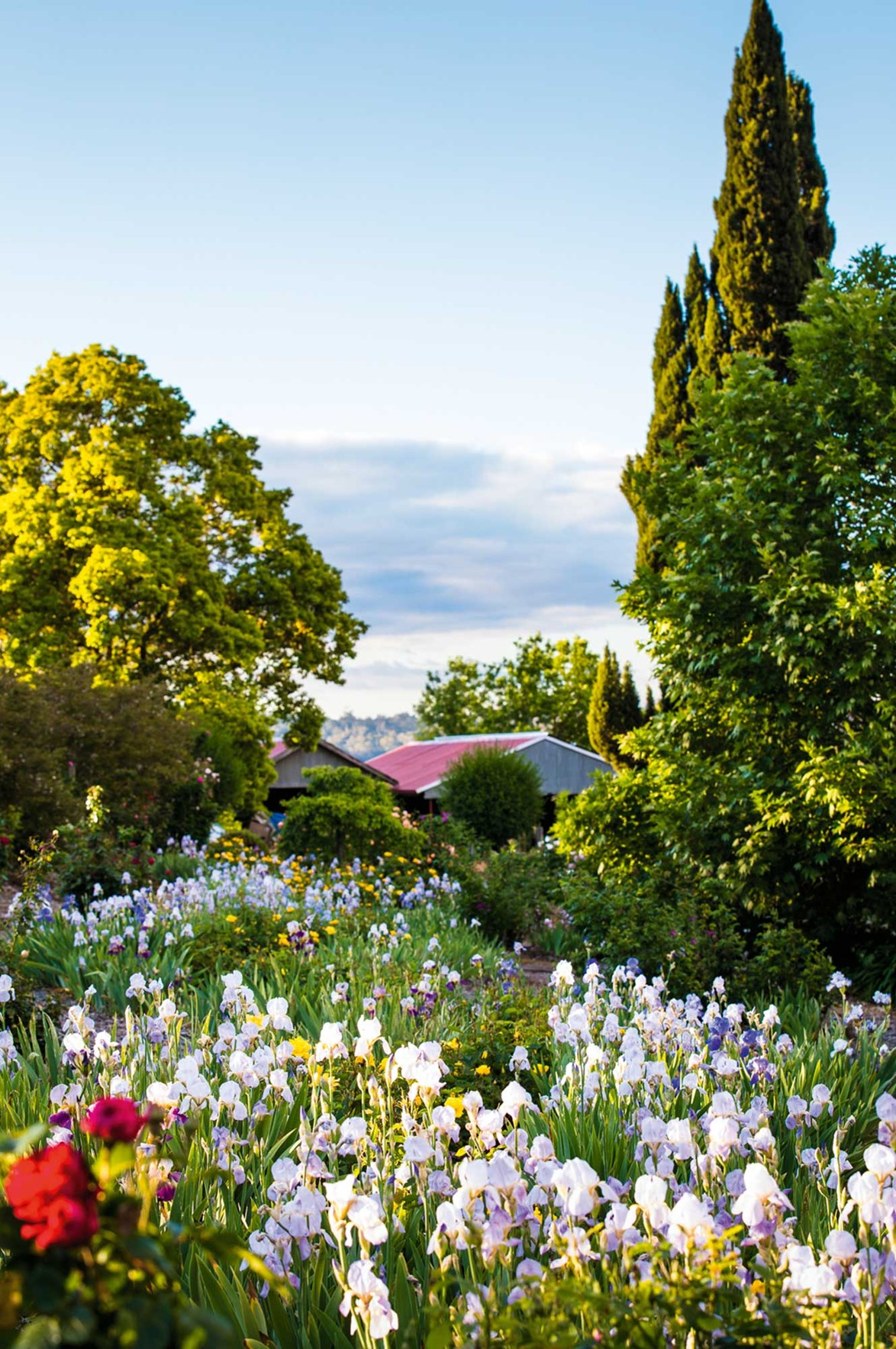 """When a large portion of [Brackenhurst](https://www.homestolove.com.au/a-much-loved-garden-brought-back-to-life-after-a-bushfire-13854