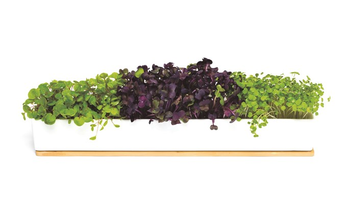 Now growing rocket needn't be rocket science. RetroKitchen microgreens window box grow kit, $59.95, [Hard to Find](https://www.hardtofind.com.au/)