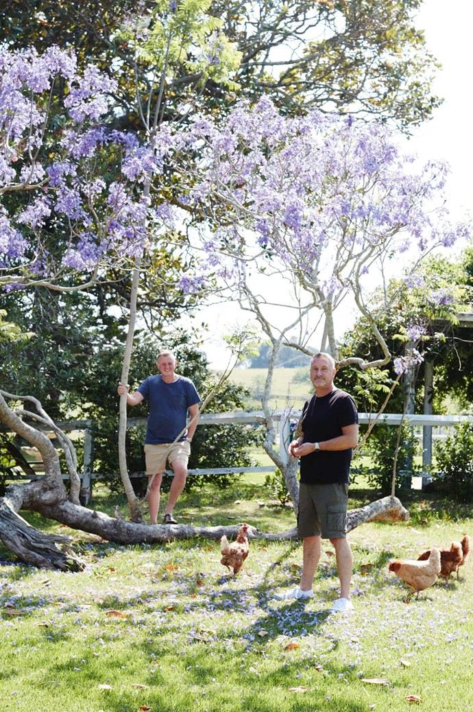 Darryl and Simon with their Isa Brown chooks.