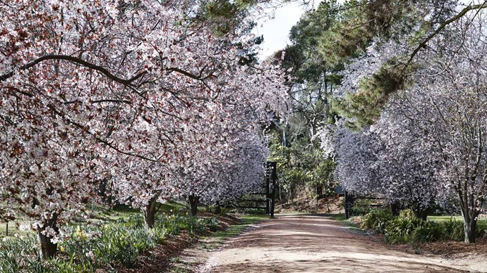 2. Trees. Gardeners based in cold-climate areas (TAS, VIC, ACT) can seed fruit trees now, for their roots to establish before warmer weather arrives.  | Photo: Mark Roper