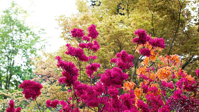 August: the month of pruning and preparation before springtime's arrival. Click through for 10 gardening jobs to satisfy those itching green thumbs before winter comes to a close.  | Photo: Mark Roper