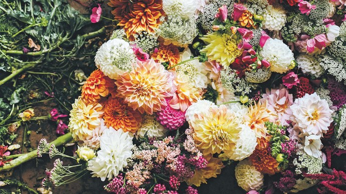 3. Summer flowers. Think geraniums, marigolds and dahlias. Dahlias can be sown anytime between late August to the end of the year.  | Photo: Shantanu Starick & Lentil Purbrick