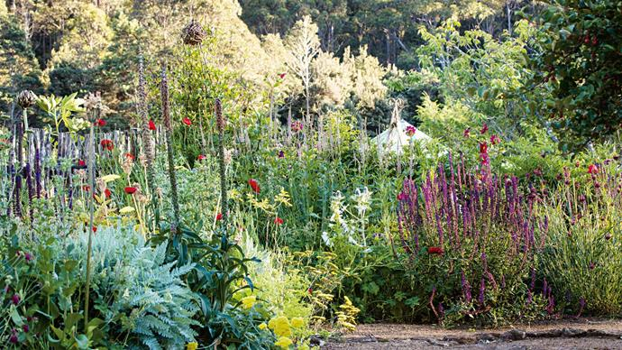 3. Sally Johannsohn's Garden: Perennials like poppies and 'Salvia nemorosa' reach their peak in the garden. Sally grows many exotic plants in her nursery, specialising in unusual cool-climate perennials from Asia, the North American woodlands and Europe. 