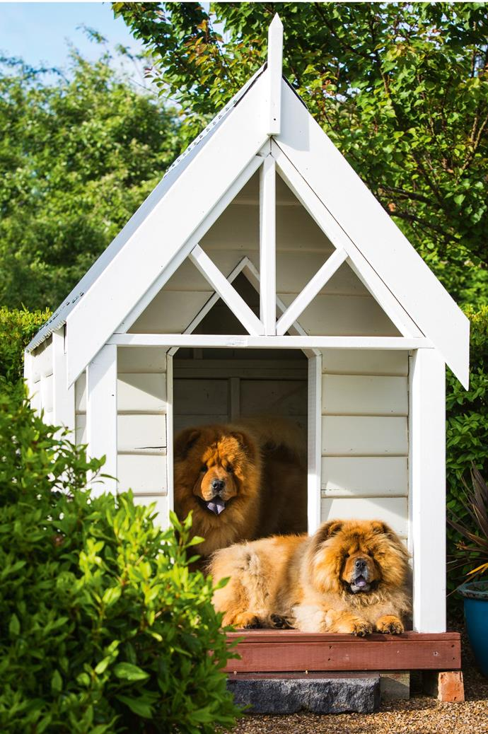 Chow Chows BJ and Katy relax in a kennel built by Jim, who designed it in the style of a miniature church to reflect the original building. The doghouse even has its own garden.