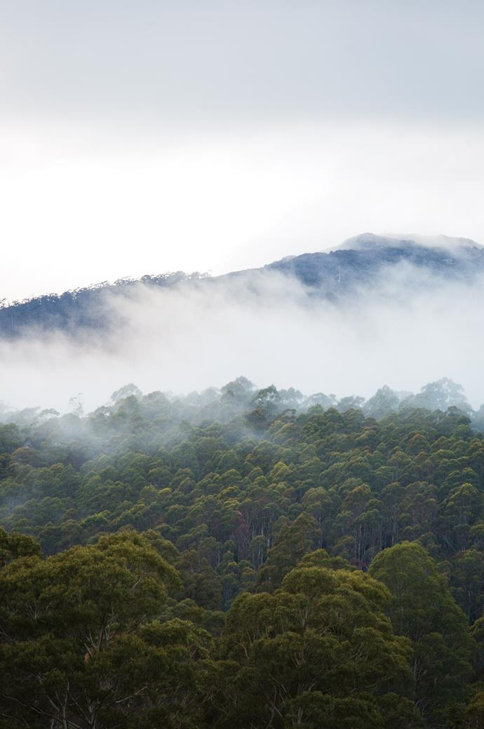 """A mist sets over Brown Mountain, whose shadow extends over Underwood. """"I just get so lost in the time here,"""" Sally says. """"The atmosphere can be so peaceful."""""""