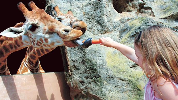 At Taronga Zoo, there's buffet-style meals on offer, night-time safari tours, daytime shows and up-close and personal animal encounters. Hey, someone's got to feed those giraffes.