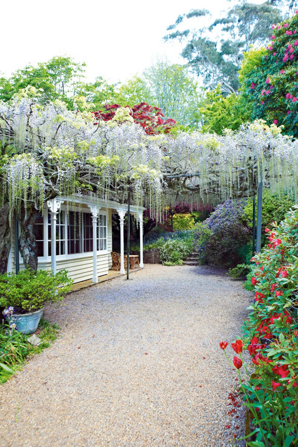 "[Nooroo Garden on Mount Wilson](https://www.homestolove.com.au/mount-wilson-garden-13257|target=""_blank"") in the Blue Mountains is renowned for its many wisteria varieties, including one wisteria floribunda 'Macrobotrys' that is over 90 years old. Here, the purple flowers are draped over a pergola at the rear of the home, providing colour and shade to the outdoor area. *Photo: Michael Wee*"