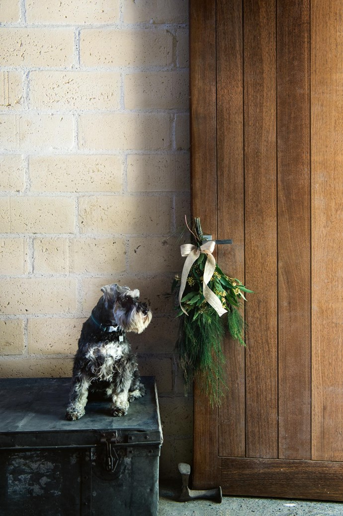 Alfie, the miniature schnauzer, stands guard at the door to the mud room. | Photo: Brigid Arnott | Styling: John Mangila