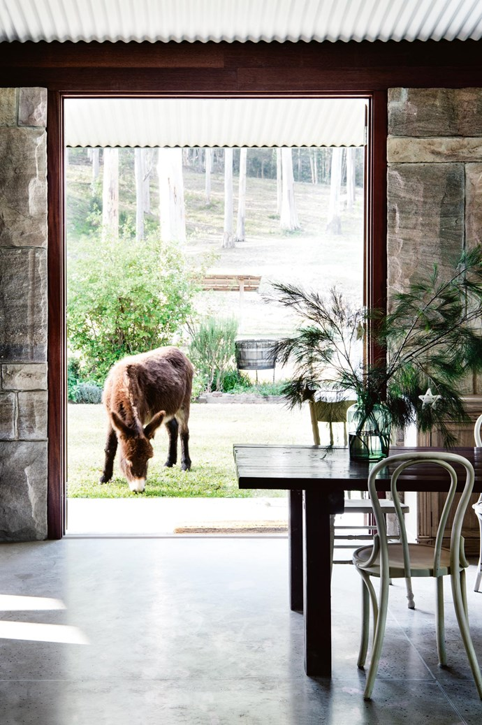 Large doors open the dining room up to the garden where Toby, one of the Blomfield's pet donkeys, is grazing. A vase of decorated casuarina pine branches sits on the table. | Photo: Brigid Arnott | Styling: John Mangila