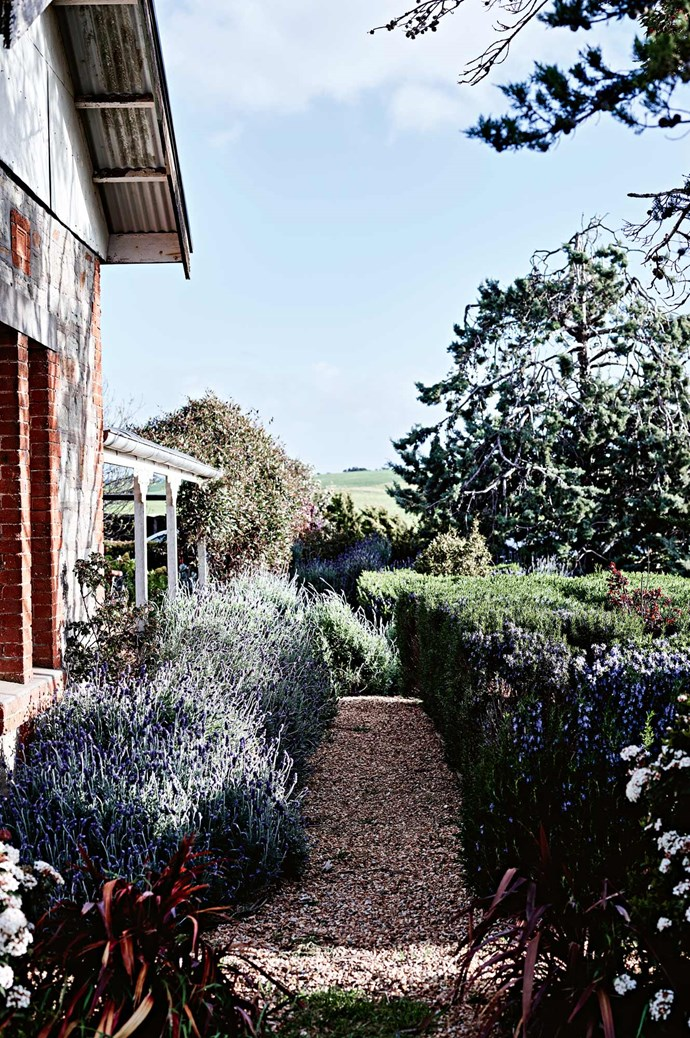 Damien, who has experience in horticulture and landscape gardening, has planted the garden with hardy species like lavender and rosemary.  | Photo: Mark Roper | Styling: Lee Blaylock