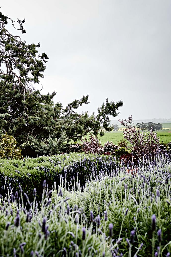 A maze of Damien's plantings carves its way through the garden.  | Photo: Mark Roper | Styling: Lee Blaylock