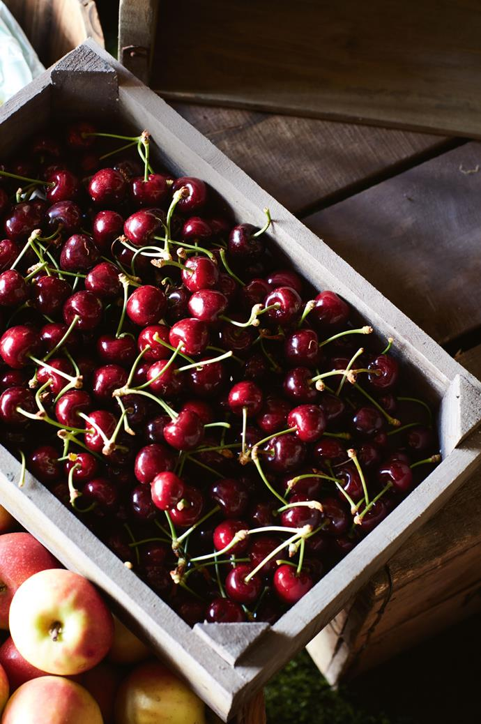 A box of Sunburst cherries grown at the orchard, where fruit starts to ripen in late November and continues until the end of January.