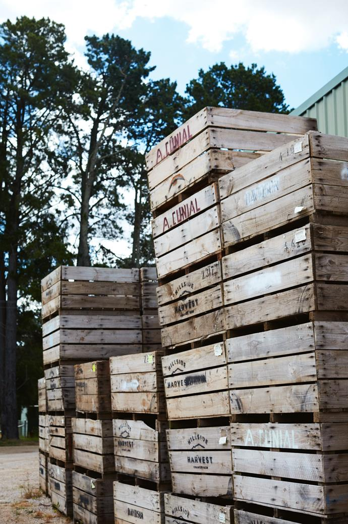 Crates are used to store the harvest's apples and pears. In autumn, people often drop by to buy fire-engine red apples.