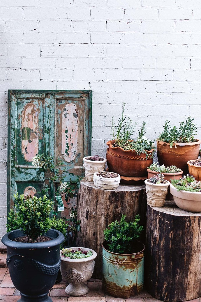 In the courtyard, potted plants and succulents  are both for sale and used to propagate foliage for displays. Beside an antique door is a shelf that Gabby's husband Kimble made using salvaged timber and sawn-off bobbin reel.  | Photo: Abbie Melle