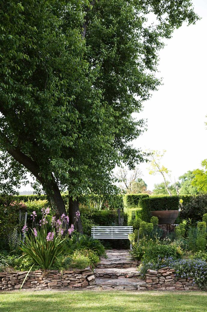 A glimpse of the hedged avenues behind a drystone wall. The bench sits under a Manchurian pear tree, chosen for its blossoms in spring and generous shade in summer.
