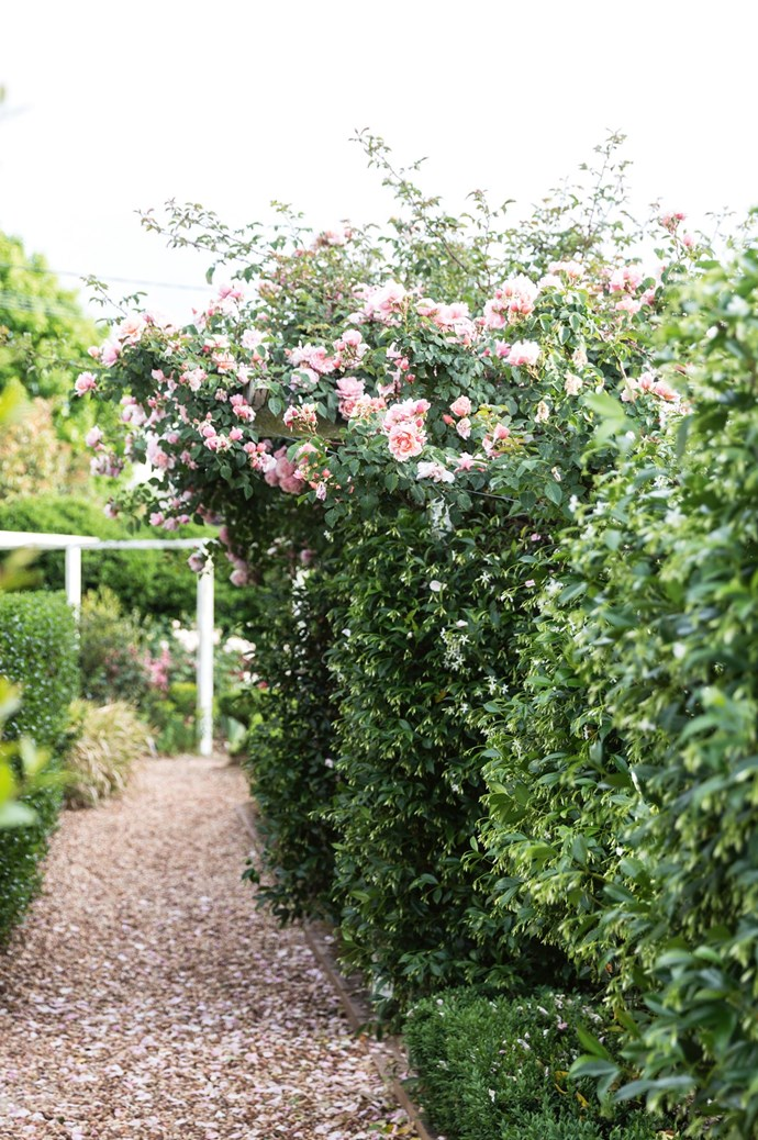 'Albertine' rambling roses tumble over a hedge of star jasmine. The garden is full of swathes of pink roses: pale pink rambling 'Chaucers', creamy 'Champagne Moments', 'Pierre de Ronsard' roses and Amelia's favourite, 'Perditas'.  | Photo: Annabelle Hickson