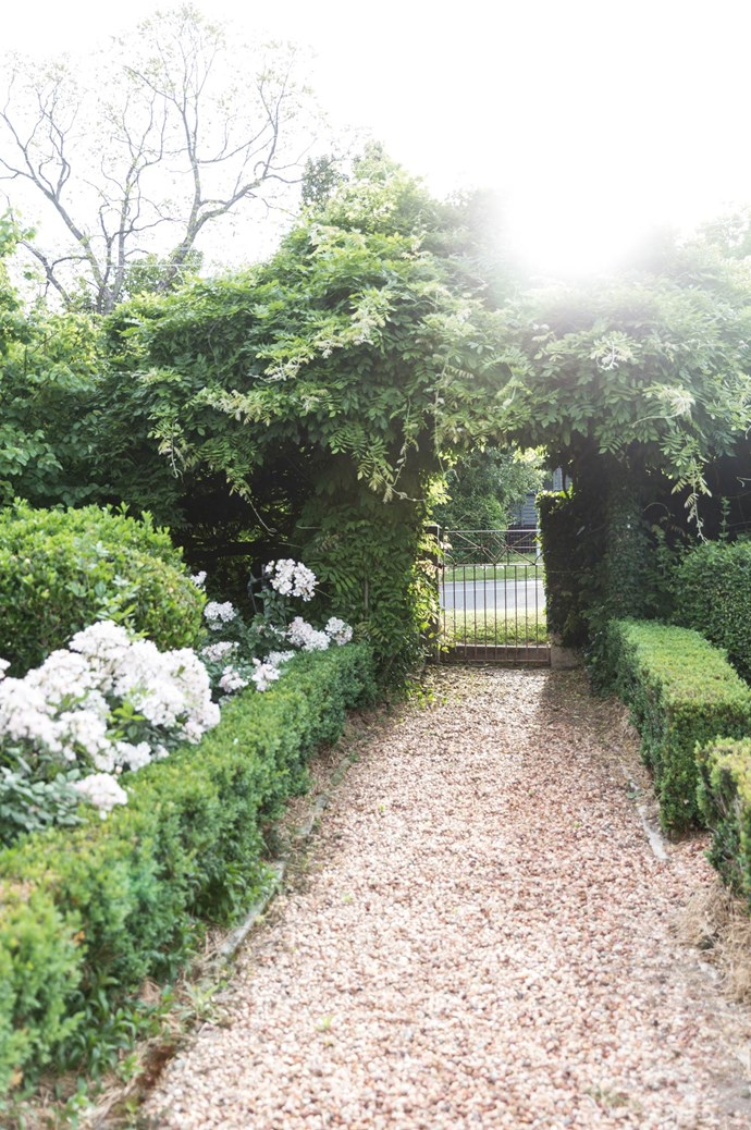The front garden, where clipped English box hedges and gravel paths border mass plantings of roses and Dutch box balls. Lush wisteria softens the fence line.  | Photo: Annabelle Hickson