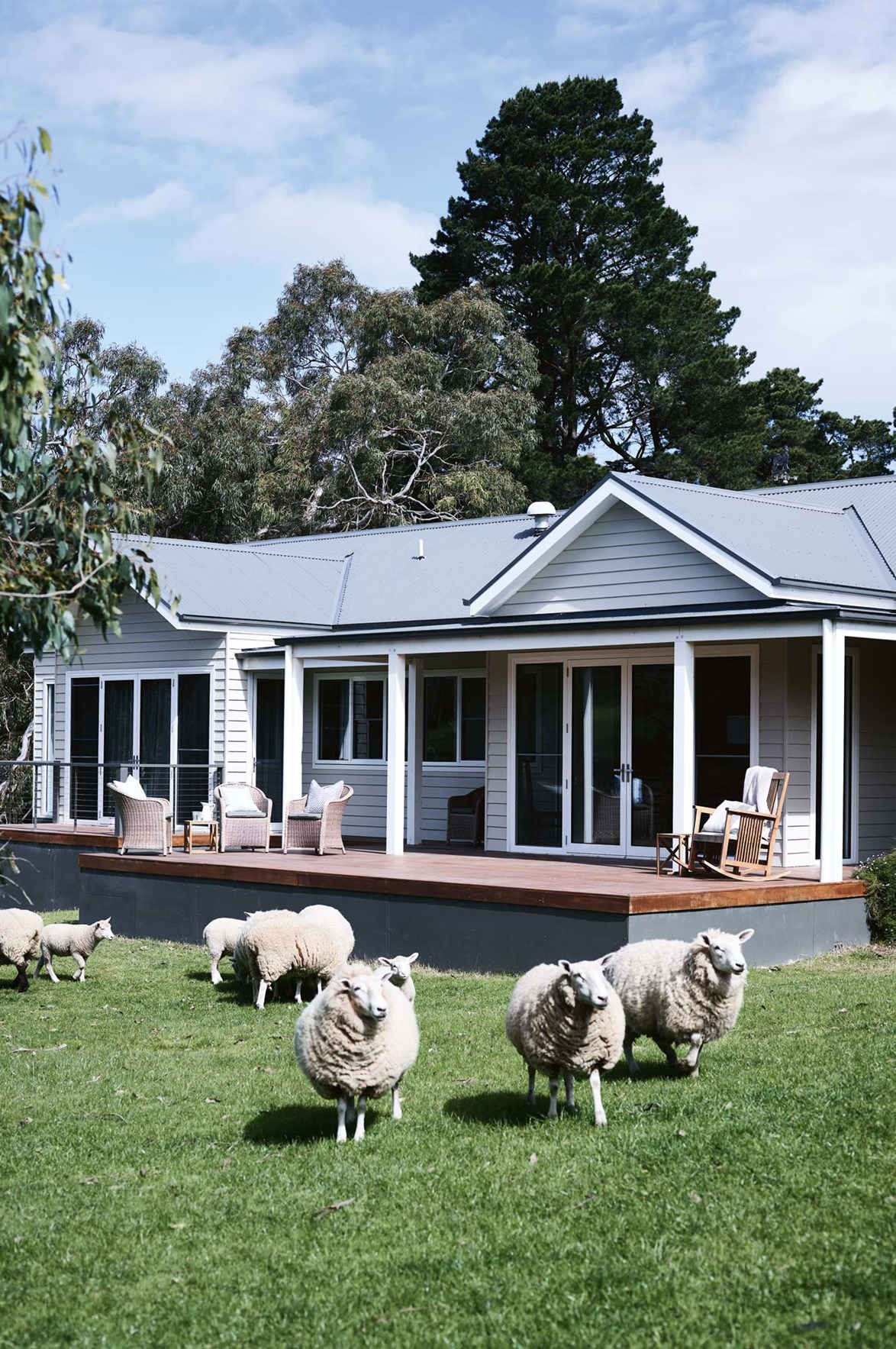 """A flock of Romney Marsh sheep and lambs graze right up to the verandah of [Haven Red Hill](https://www.homestolove.com.au/you-can-stay-here-hillside-haven-in-victorias-mornington-peninsula-13977