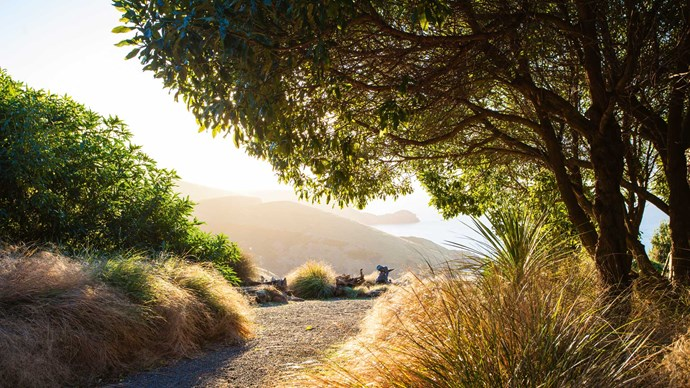 """Mounding grasses reflect the shape of seaside cliffs behind. More minimal plantings are supplemented by views that are nothing short of dramatic. In Richard's words, """"It's probably lucky we have the natural boundaries of sea and valley, so we have to stop gardening at some point."""" For further information on Fishermans Bay Garden, click [here](https://www.fishermansbay.nz/). 