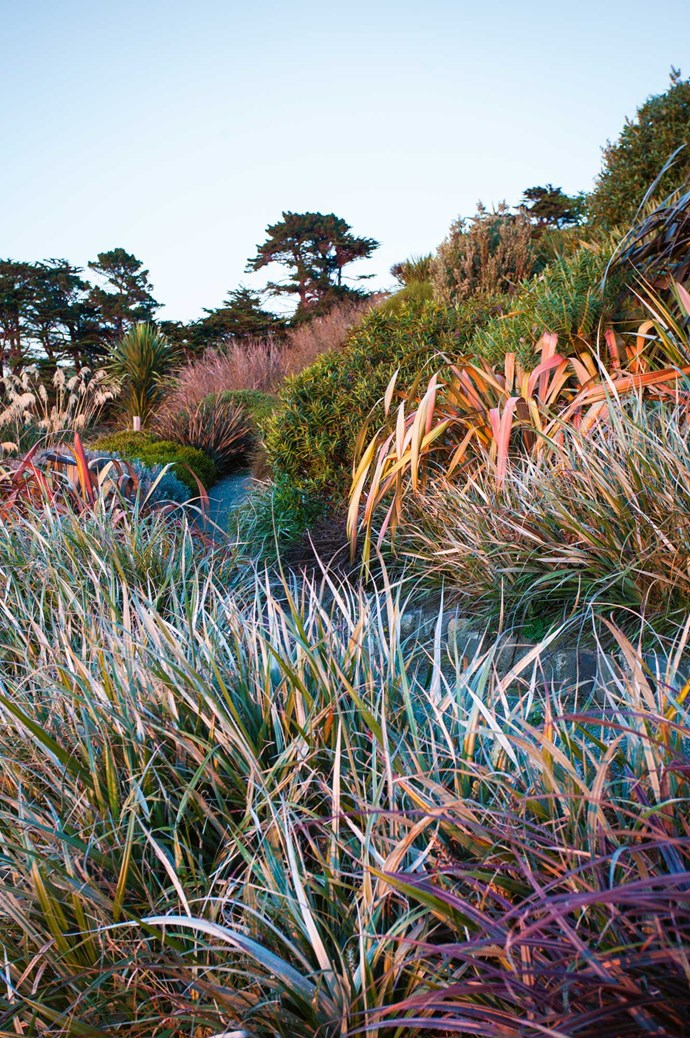 """The phormium plantings redden against the dying light. """"Landscape design is also about the continually changing light — from gorgeous oranges, as the sun rises from the ocean, to the hard, crisp light in the middle of the day that bleaches out all but the strongest colours, and the soft pinks of sunset reflected in the evening sky,"""" Jill explains.  