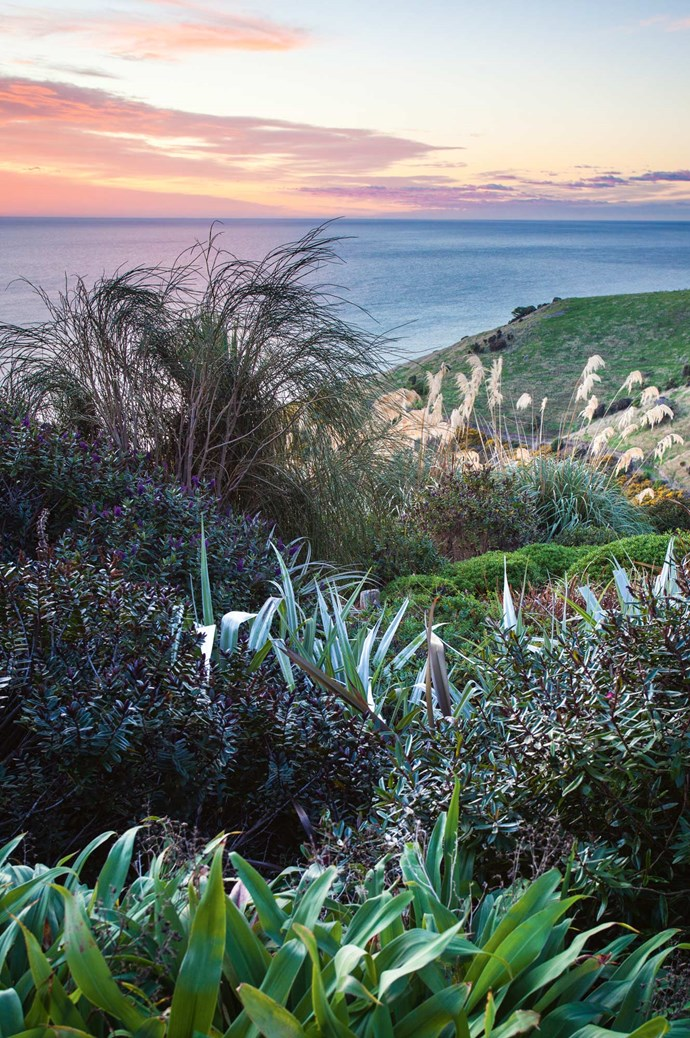 Low-growing hebe shrubs and Astelia 'Silver Spears' cover the hillside. These hebes best encapsulate the structure and texture of native New Zealand plants.  | Photo: Claire Takacs