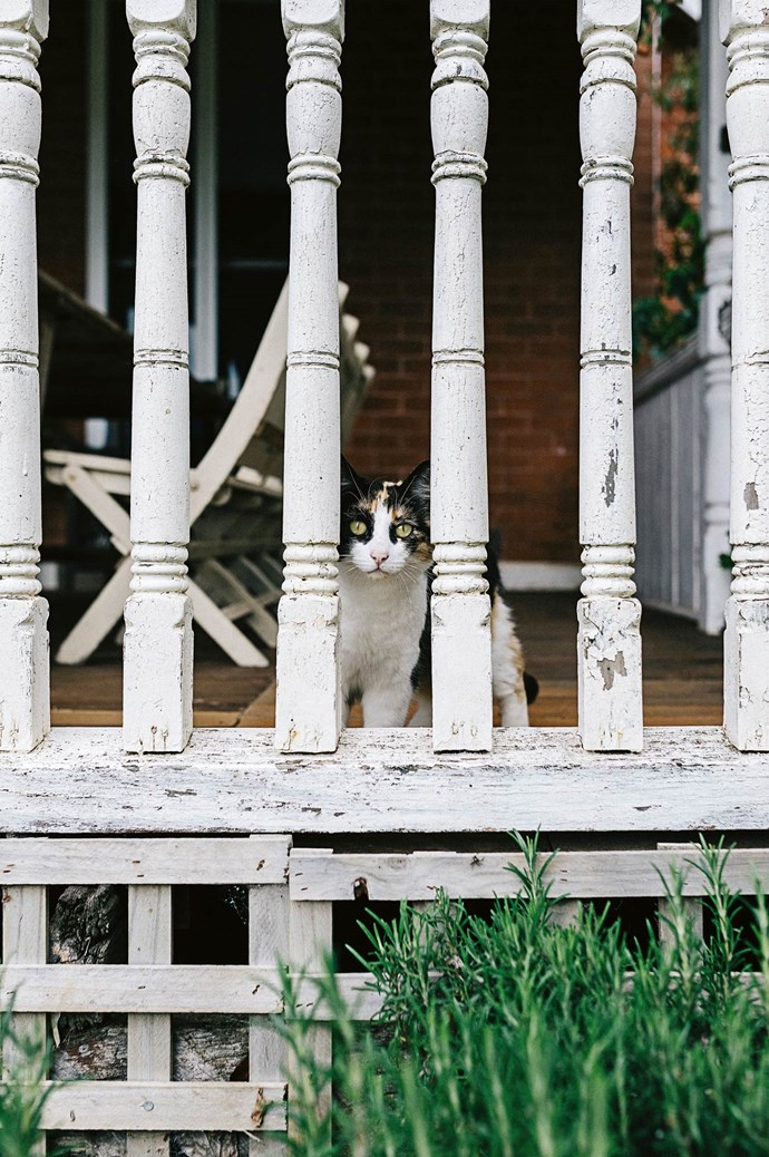 Ash the cat peeks through turned timber posts.  | Photo: Marnie Hawson
