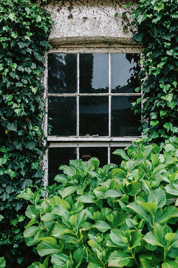 "A window is partly concealed by dense green foliage and [climbing vines](https://www.homestolove.com.au/12-best-vines-and-creepers-for-australian-gardens-13587|target=""_blank"")."